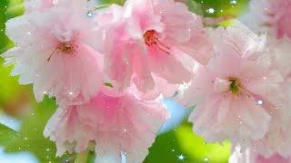 МАЙСКИЕ ЦВЕТЫ ДЛЯ ТЕБЯ, ПОДРУГА! MAY FLOWERS FOR YOU, FRIEND!