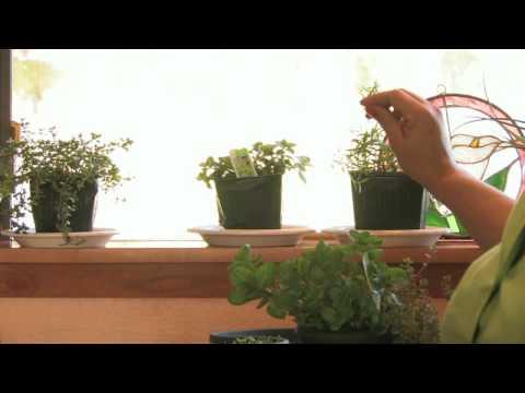 Grow A Herb Garden Indoors Growing herbs how to grow an herb garden indoors youtube workwithnaturefo