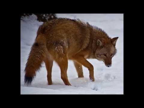 Клип The Chieftains - Shenandoah