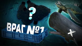 Что убивает морских существ?
