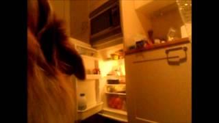 Dog Tricks - Je hond aanleren om drank uit de koelkast te halen