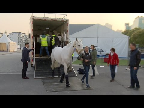 First Batch of Race Horses Arrive in Shanghai