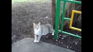 KSN Любопытная кошка с большими глазами