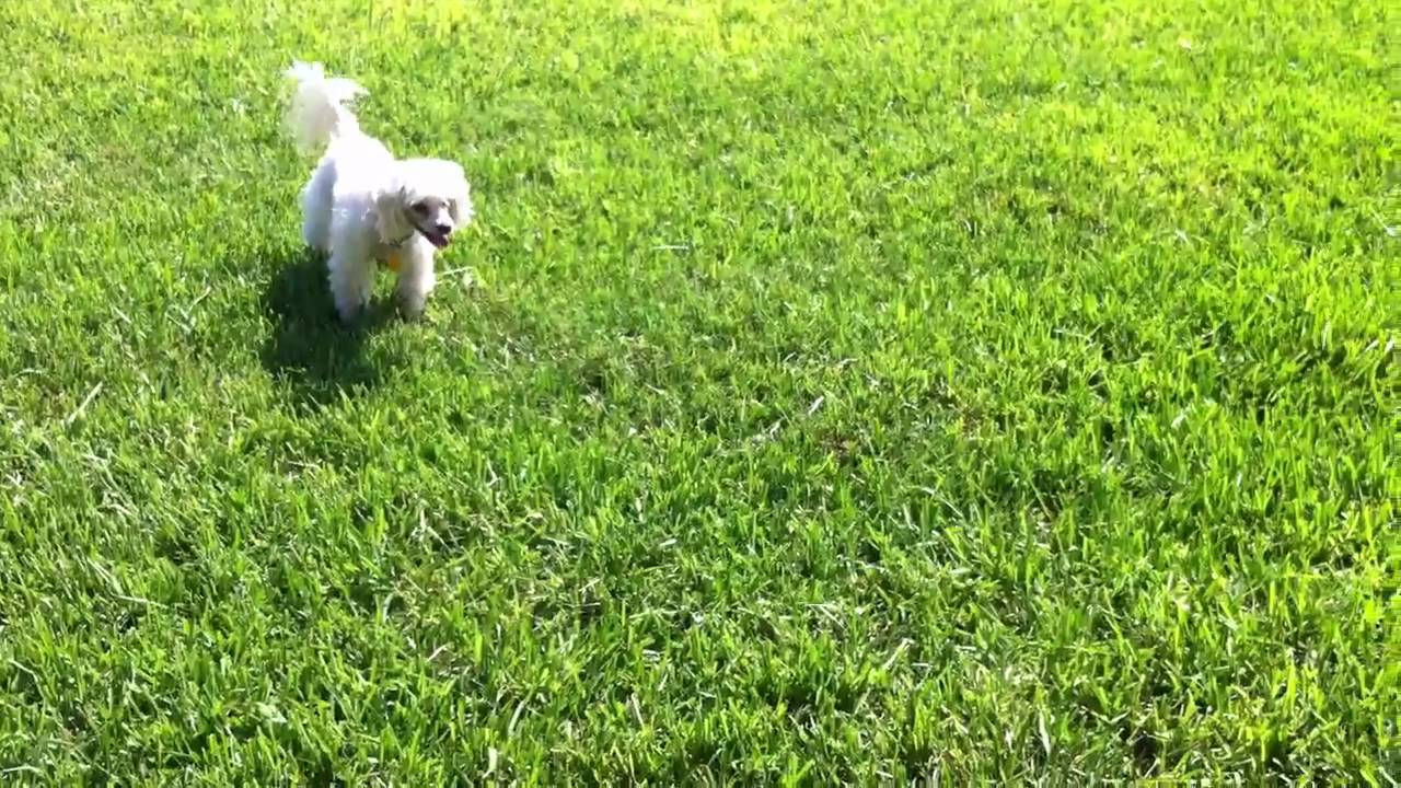 how to stop my dog chasing shadows