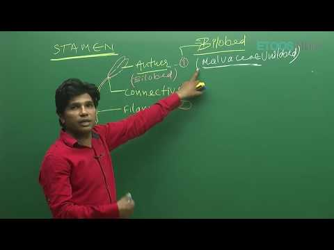 Sexual Reproduction in Flowering Plant by M. Asad Qureshi (MAQ) Sir (ETOOSINDIA.COM)