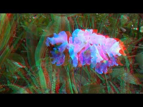 3d Video: The Garden