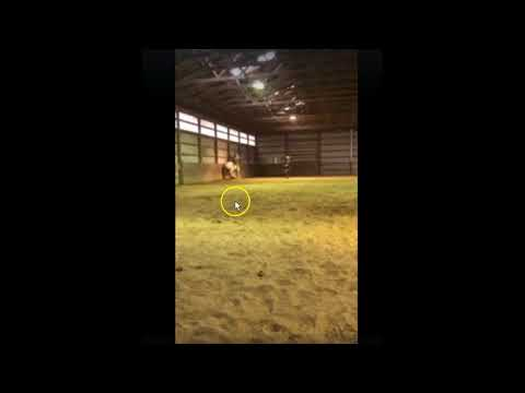 Horse Training 101  Dont Trap A Horse & Dont Hit A Trapped Horse