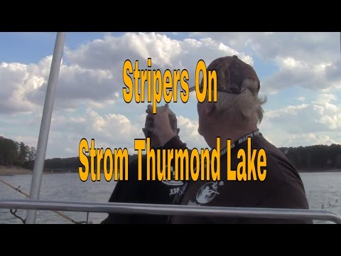 Stripers on Strom Thurmond Lake in South Carolina, Clarks Hill Lake Stripers, Catching Stripers