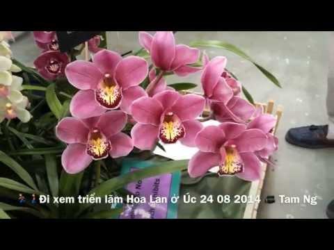 Orchid Show In Australia 2014 - Đi xem Triển Lãm Hoa Lan ở Úc 2014