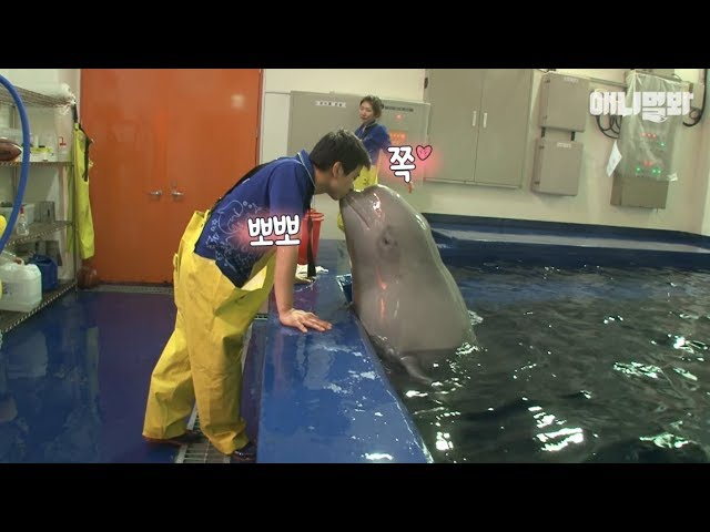 Whale Tina, who fell in love with the male zookeeper..