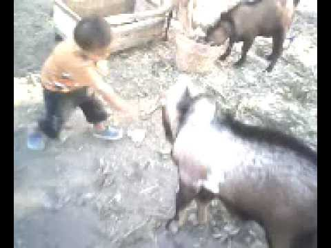 Anak bertarung melawan binatang buas