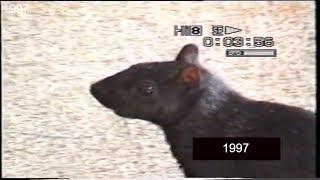 1997 - Canada - Danza di un paffuto e impavido scoiattolo nero