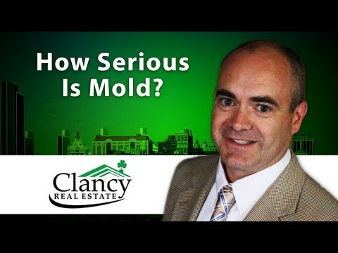 Albany Real Estate Agent: How serious is mold?