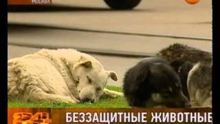 Депортируют ли из Москвы бездомных собак?