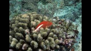 exquisite marine ecology [720p HD]
