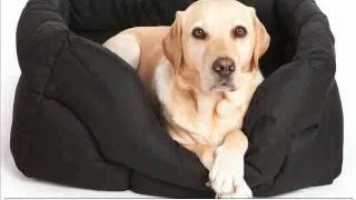 Watch Ock9 #1 Memory Foam Dog Beds Cbs News Super Zoo Pet Show - Memory Foam Dog Beds