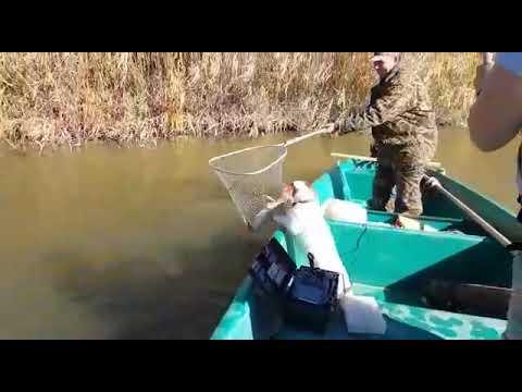Рыбалка на р.Рычинская, щука на троллинг.