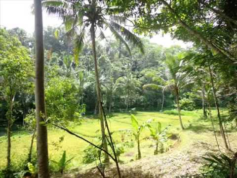 Exotic Property for sale in Bali, Land for sale in Ubud Bali - TJUB239
