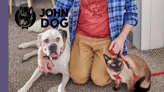 Jak przygotować psa na pojawienie się kota? – TRENING – John Dog
