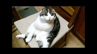 FUNNY CATS OF ALL TIME