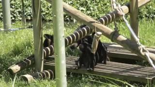 この日は、デッキーさんの群。 Chimps at Tama Zoological Park, Tokyo,...