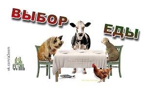 Выбор еды (Food Choices) озвучка АзъЕсмь