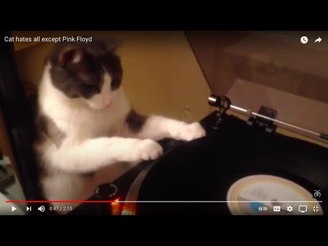 My Cat Lea Hates All Except Pink Floyd