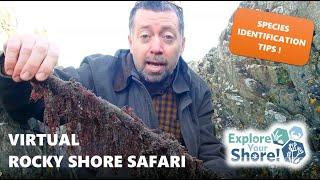 Explore Your Shore Virtual Rocky Shore Safari