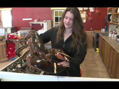 Woman Buys 23 Pound Lobster to Set Him Free - YouTube