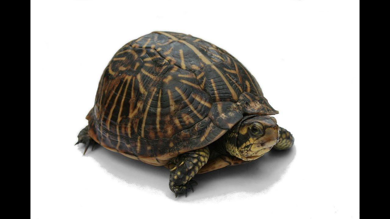 Turtle: Animals for Children Kids Videos Kindergarten Preschool ... Zoo Animals Toys