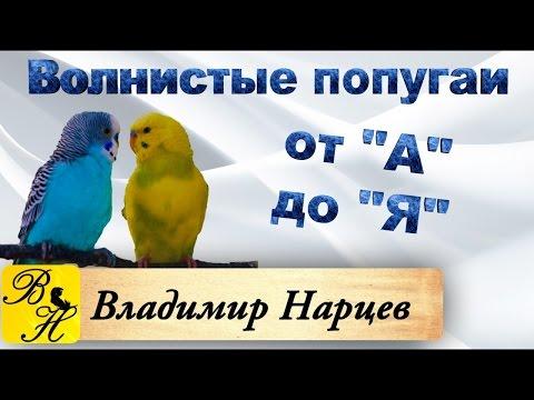#Волнистые попугаи от А до Я ч.1
