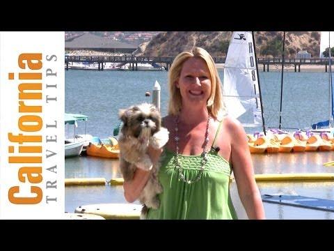 Pet Friendly Hotels In California   California Travel Tips