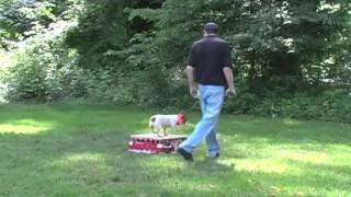 Maryland Dog Training   Andrew And Bingo1