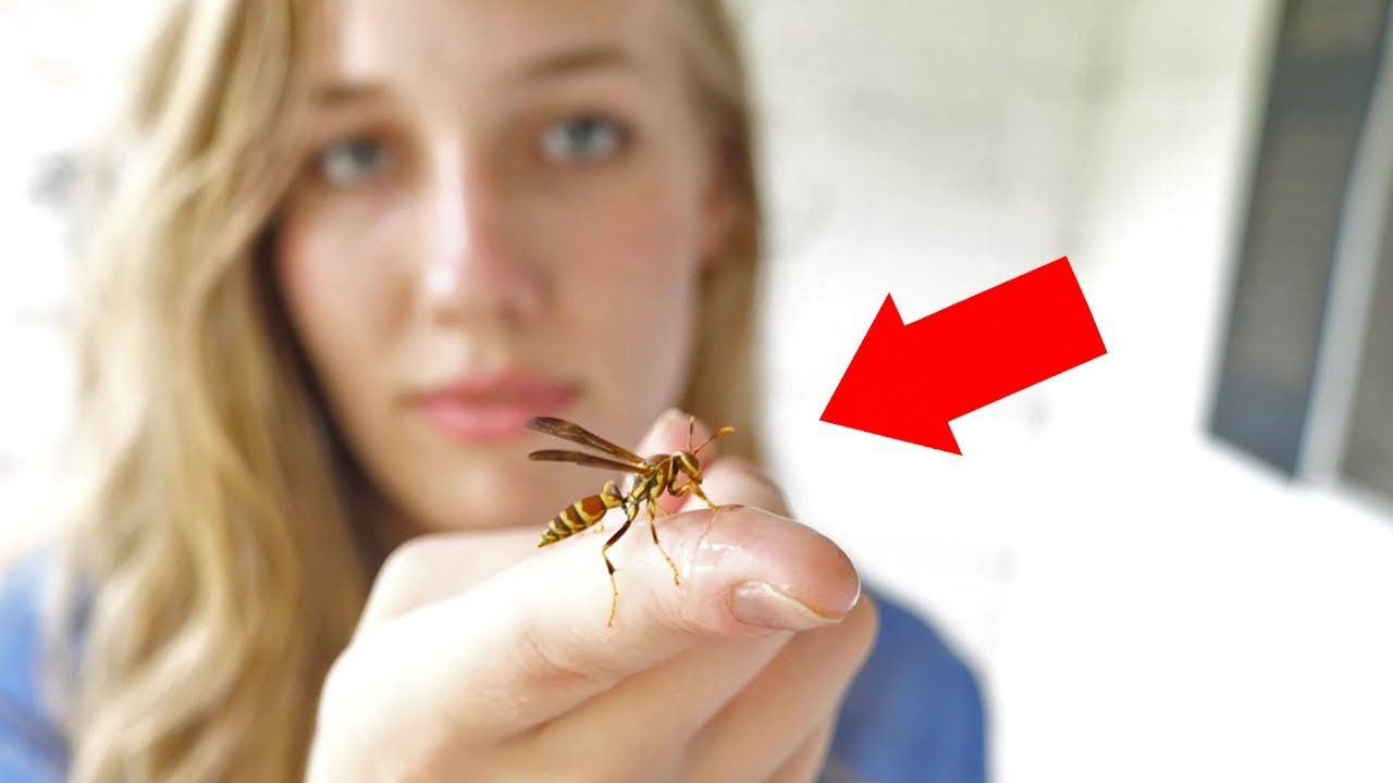 My Sister Holds a Wasp for $50