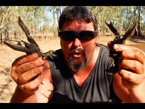 The art of yabbying. Catching big black yabbies with drop nets