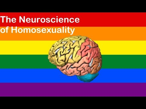 Is there a gay brain? The neuroscience of homosexuality