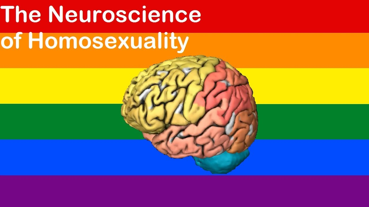 Is there a gay brain? The neuroscience of homosexuality - YouTube