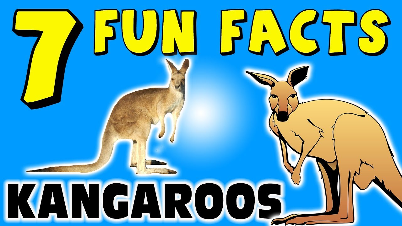 7 FUN FACTS ABOUT KANGAROOS FOR KIDS Australia Animals Learning Colors Funny Sock Puppet