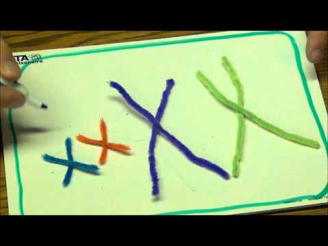 Mitosis mastery using pipecleaner model youtube mitosis mastery using pipecleaner model ccuart Images