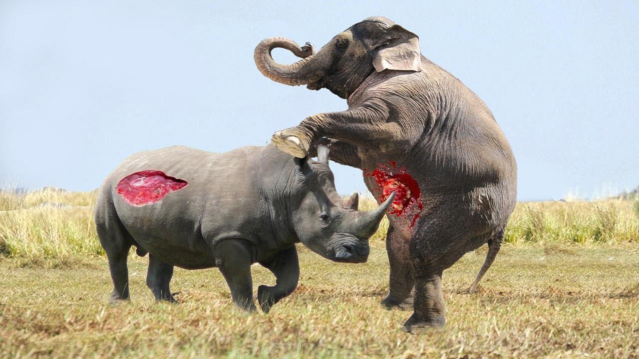 elephant vs rhino real fight - animal world - animals fight - youtube