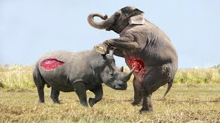 Repeat youtube video Elephant vs Rhino Real Fight - Animal World - Animals Fight