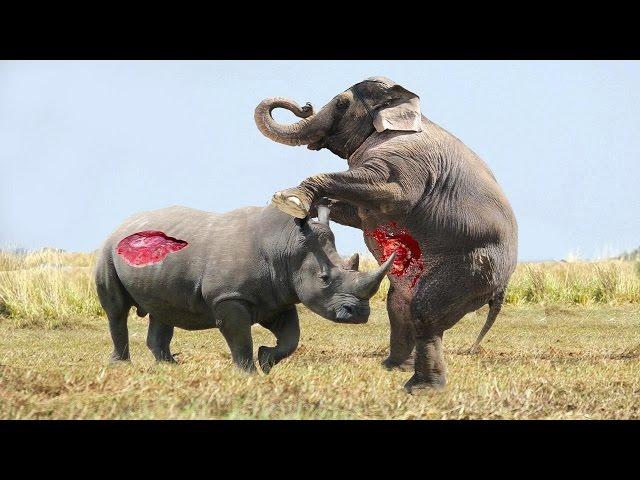 Elephant vs Rhino Real Fight - Animal World - Animals Fight