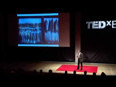 The reach of a restaurant: Thomas Keller at TEDxEast
