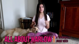 All About Harlow! 🐶