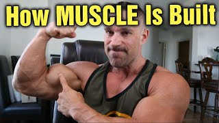 How is Muscle Built??? Can it be Done in a Caloric Deficit???
