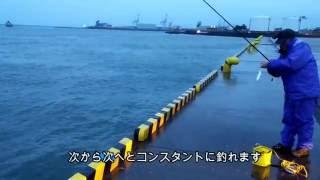 パパの暇つぶし アジ釣り 秋田市セリオン横のフェリー乗り場