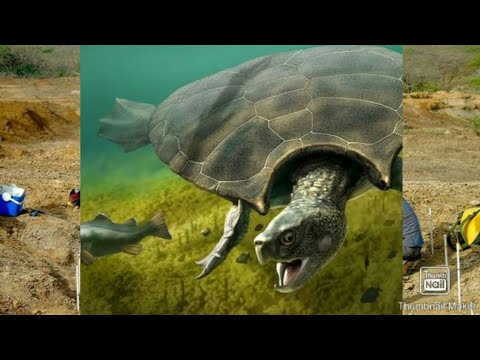 fósseis-gigantes-primitivos