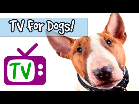 TV for Dogs, Nature Footage for Dogs, Calm Down and send Anxious Dogs and Puppies to Sleep🐶💤