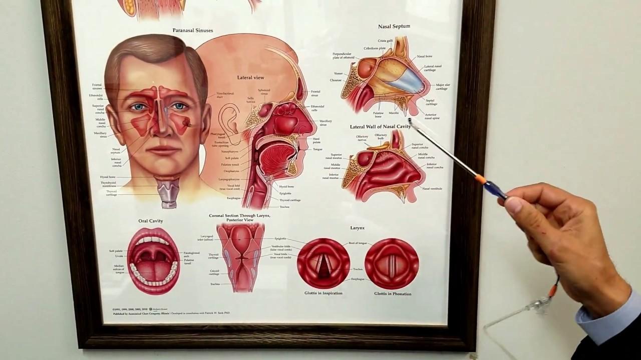 Eustachian Tube Dysfunction - YouTube