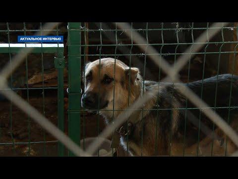 НТС Севастополь: Природоохранный прокурор – о жестоком обращении с животными